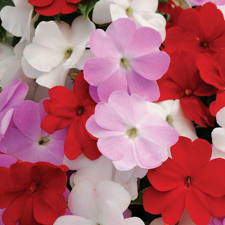 fioriture di aprile