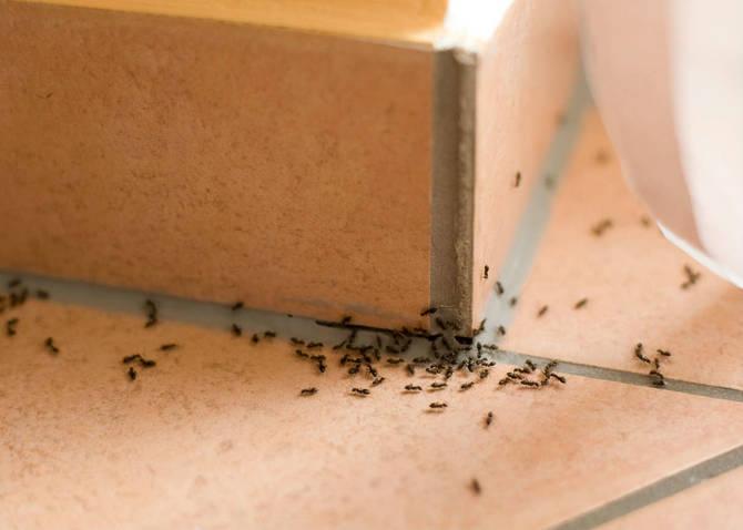 formiche in cucina nessun problema