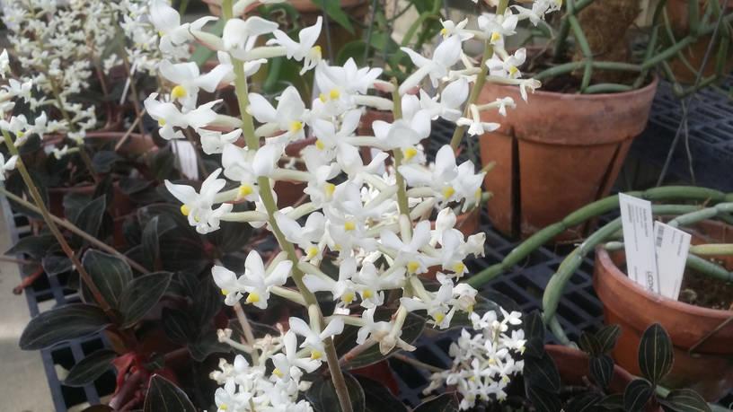 pianta di bromelia sfiorita