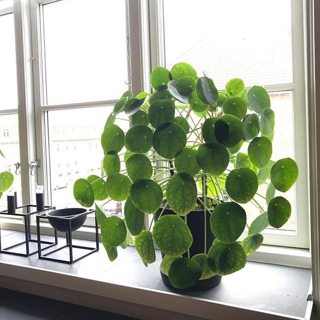 gruppo facebook identificazione delle piante