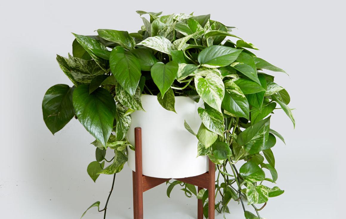 libri per le piante