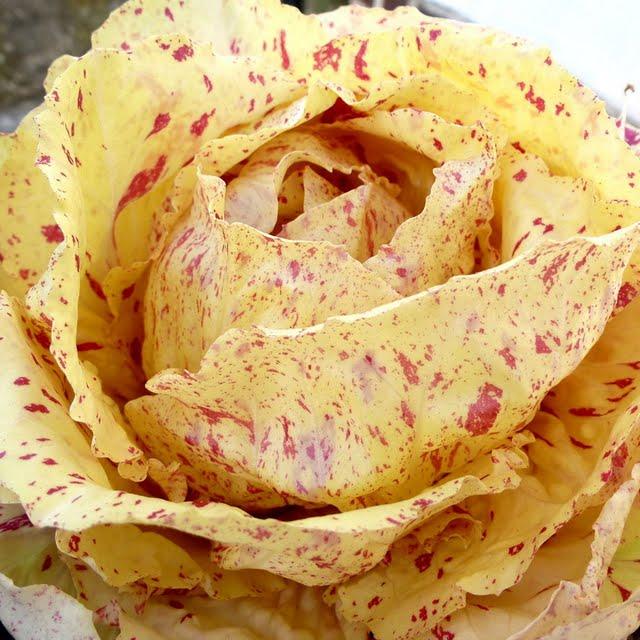 Coltivare il Philodendron