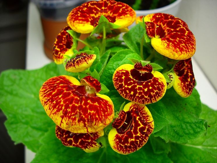 Piante grasse avversita 39 e cure lezioni di giardinaggio for Tutte le piante grasse