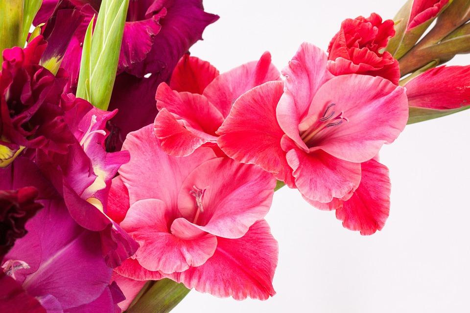 Viola 3 varieta 39 da non perdere lezioni di giardinaggio for Viola cornuta inverno